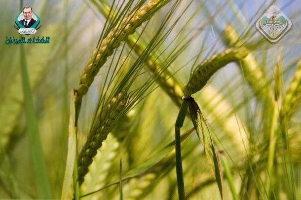 Evaluation of Barley Grass as a Potential Source of Some Nutritional Substances.